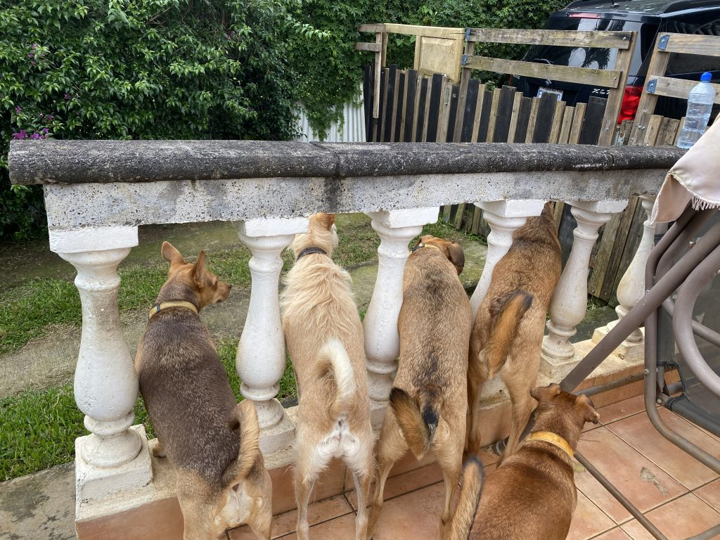 Dogs in a row