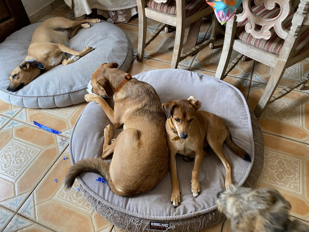 Dogs on Beds