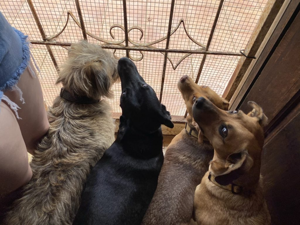 Dogs at the gate