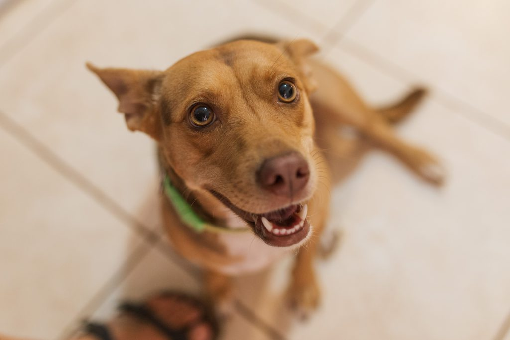 Lady's Story - The Wet Nose Rescue - Atenas Costa Rica